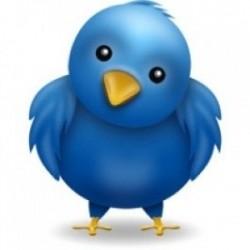 SaleHoo's Crazy Twitter Contest