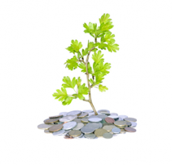 Get Cash to Grow your Business - Kabbage Review