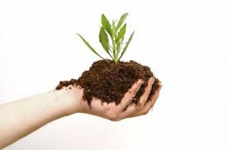 Organic Fertilizer - Monday Market of the Week