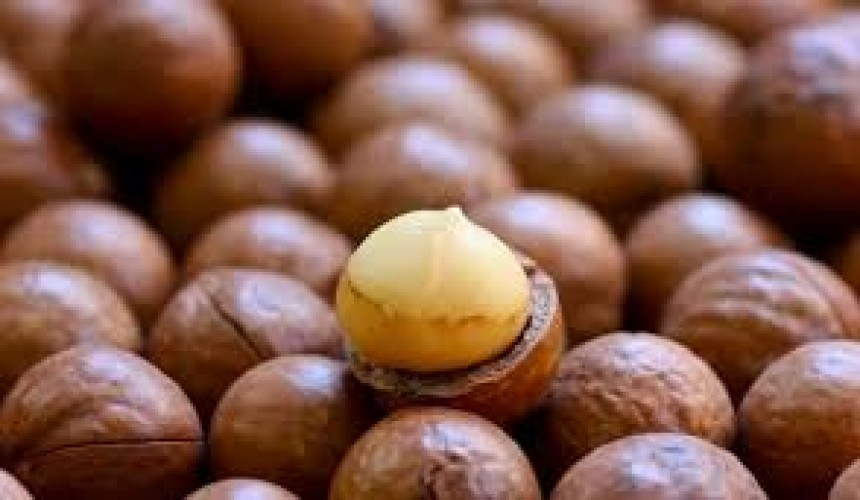 Macadamia Nuts: Monday Market of the Week