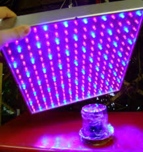 LED Grow Light: Monday Market of the Week